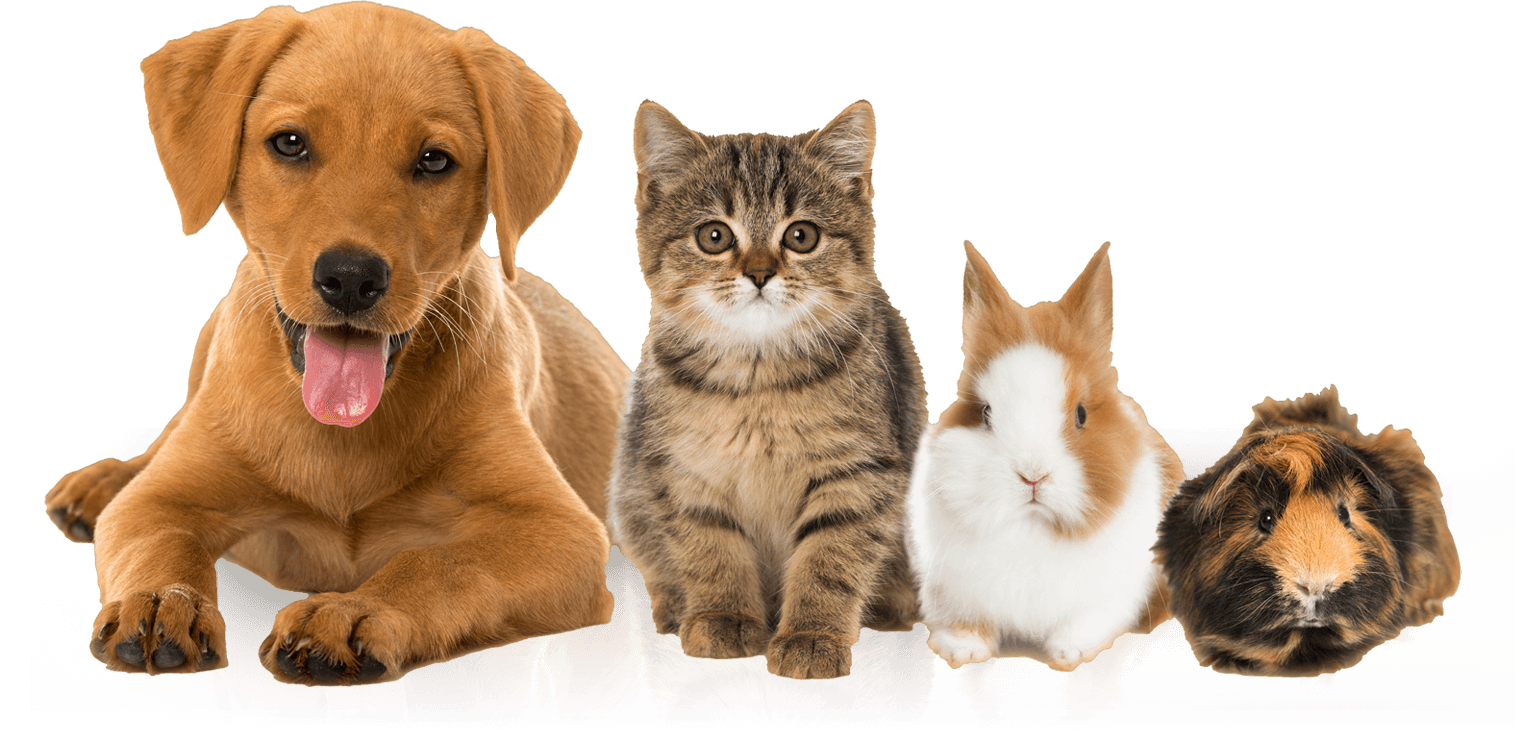 Animals we pet sit and do pet boarding, dog daycare, dog walking and dog boarding