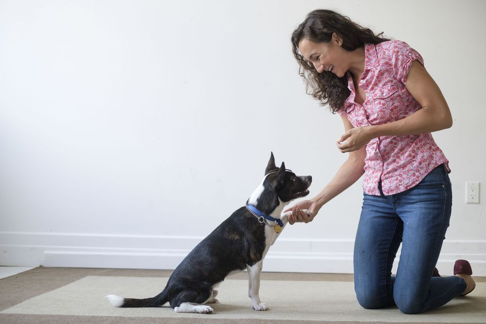 Dog training and tips for creating the right environment